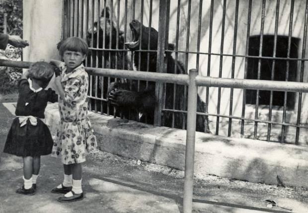 zoo-90-godina-1