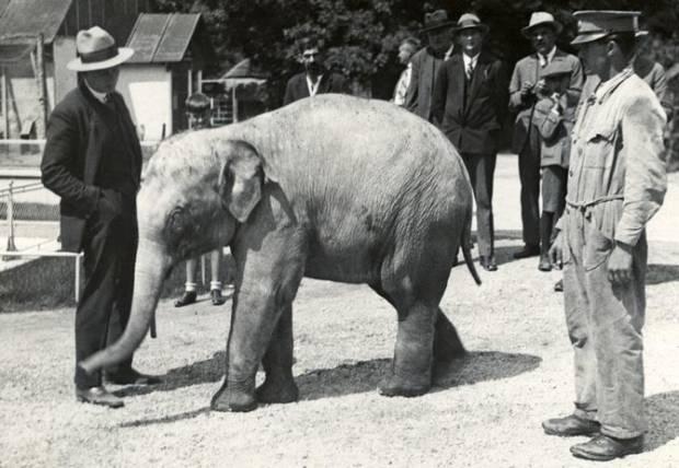 zoo-90-godina-3