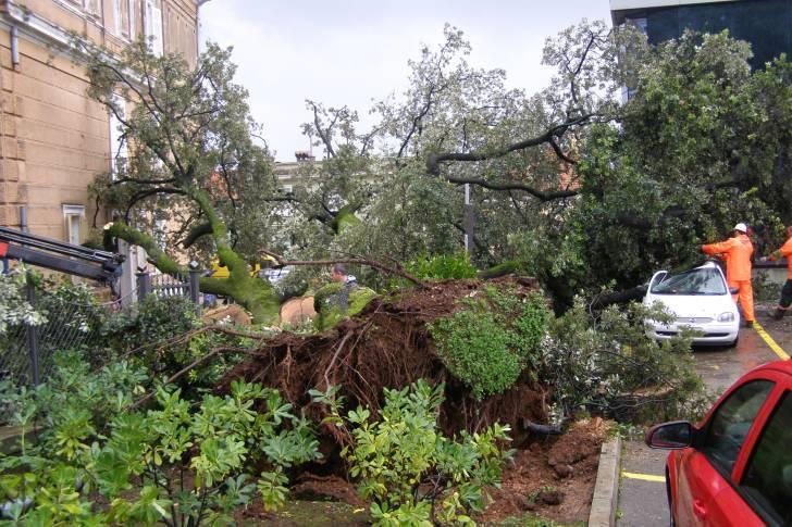 Nevrijeme - oboreno drvo