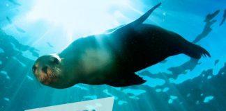 Zoološki vrt - Dan voda