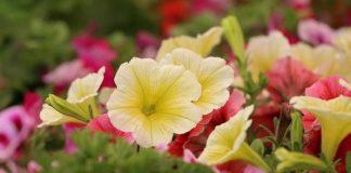 13. županijska izložba cvijeća u Zaprešiću
