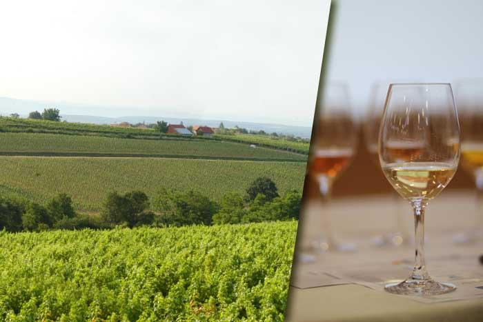 Vinogradi, vino, graševina