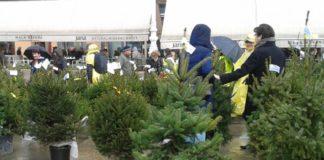 Akcija Za 1000 radosti - humanitarna prodaja božićnih drvaca