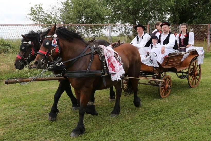U Kloštar Ivaniću održana izložba izvornih i zaštićenih pasmina hrvatskih konja