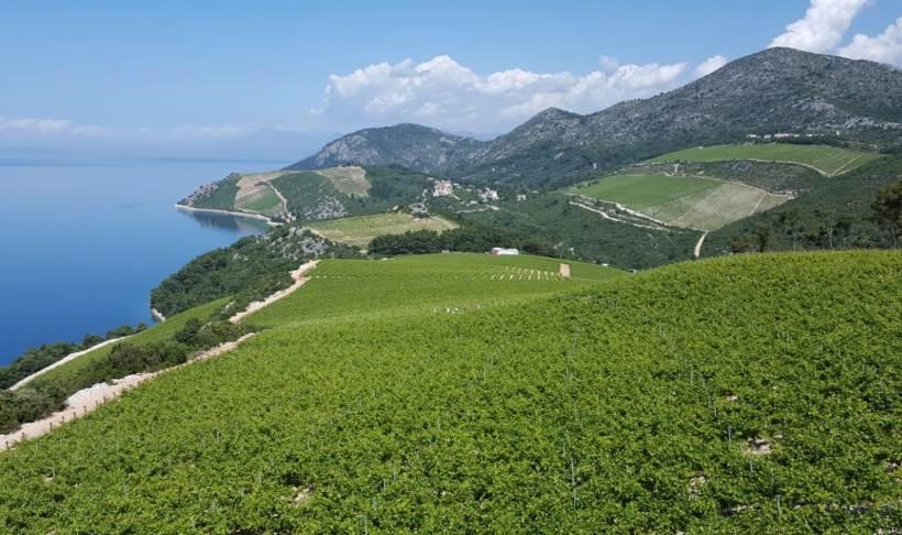 VINOLJUPCI: U četvrtak se u Zagrebu predstavlja pet vinara prestižne hrvatske vinogradarske regije