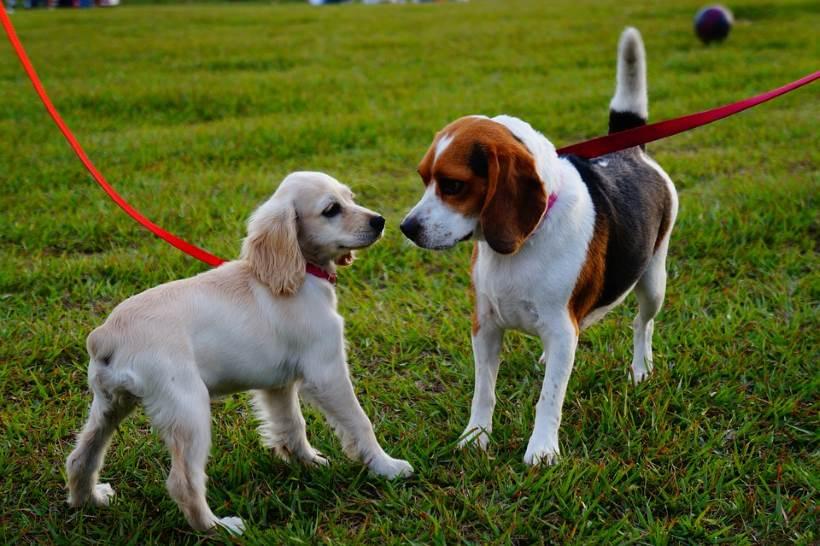 Građani Donje Kustošije žele park za pse, iz Grada dobili nevjerojatan odgovor