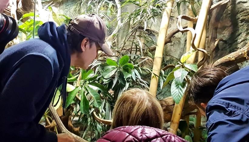U zagrebački Zoološki vrt stigla kraljevska kobra, prva u njegovoj povijesti