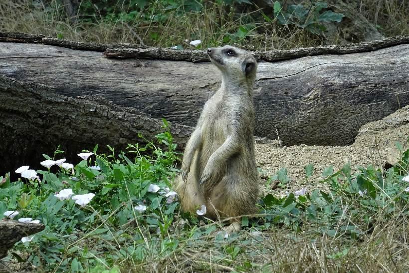 Zoološki vrt na Uskrsni ponedjeljak nudi bogat program za najmlađe posjetitelje