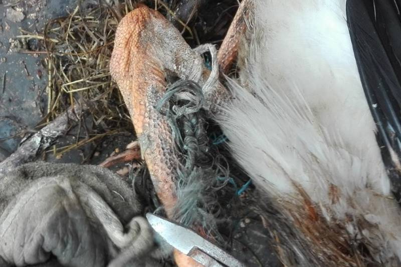 ČIGOČ: Djelatnici HEP-a spasili mladu rodu koja se bila zaplela u konopac za baliranje sijena