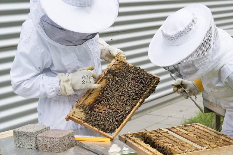 Zagrebačka županija izdvojila 90.000 kuna za pomoć pčelarskim udrugama