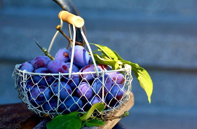 TAKO TO RADE U BEČU: Caritas sakuplja voće iz privatnih vrtova i dijeli ga siromašnima
