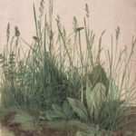 Albrecht Dürer: Studija trave