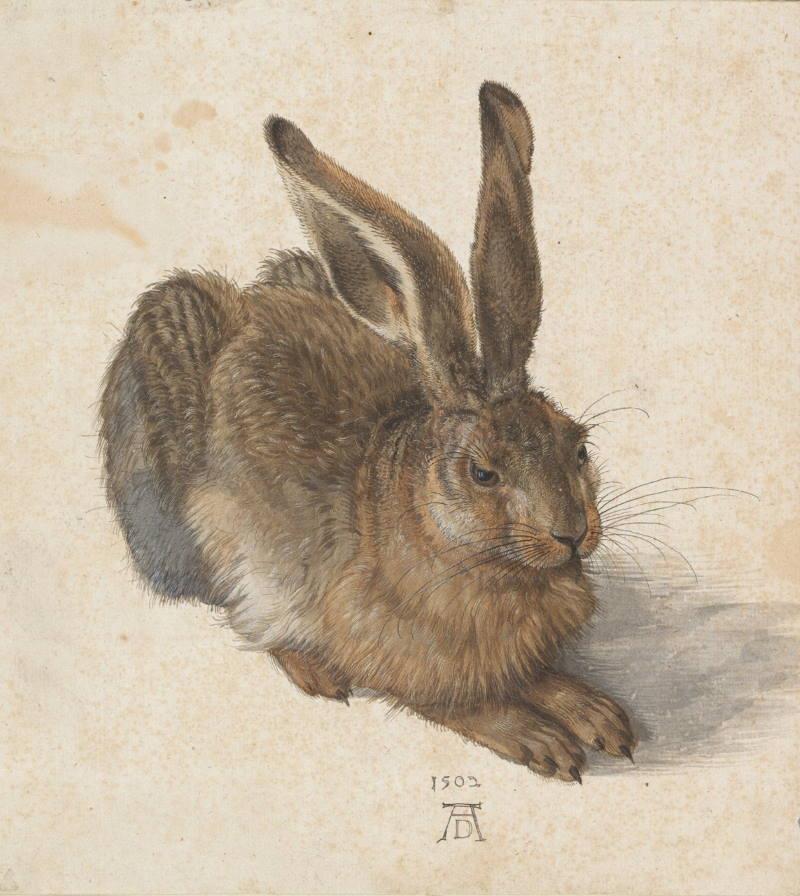 Albrecht Dürer: Zec