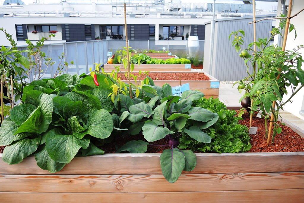 URBANO VRTLARENJE: U Beču izgrađeno naselje u kojem svi stanari mogu dobiti gredice za uzgoj povrća