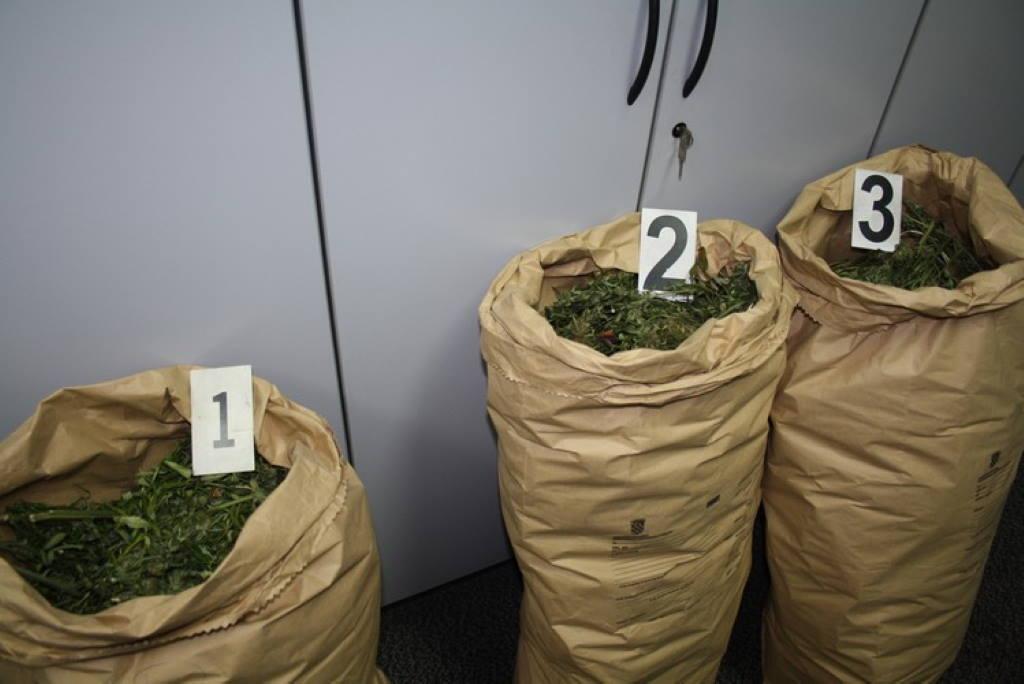 """U Zaprešiću otkrivena """"farma"""" indijske konplje, muškarac (50) priveden, zaplijenjeno 30 kg marihuane"""