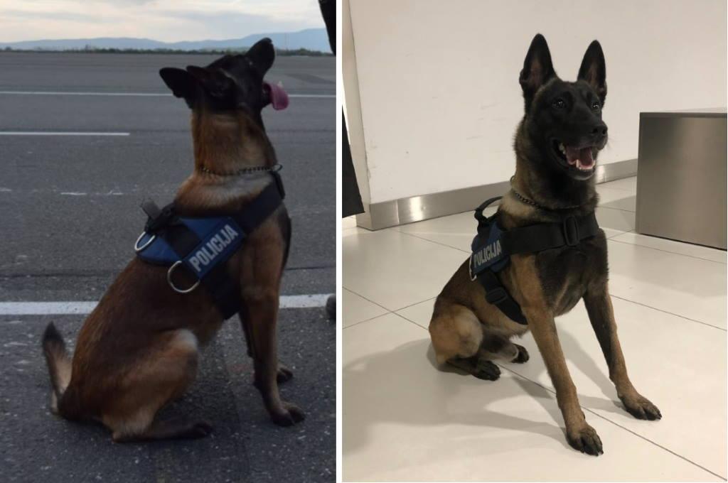 VELIKI ULOV: Policija na A3 zaustavila sumnjivo vozilo, policijski pas As u njemu nanjušio 9,2 kg amfetamina