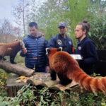 'KUMOVI' SINKOVIĆI OBJAVILI: Preslatki blizanci crvenih pandi zvat će se Dudek i Regica [FOTO]
