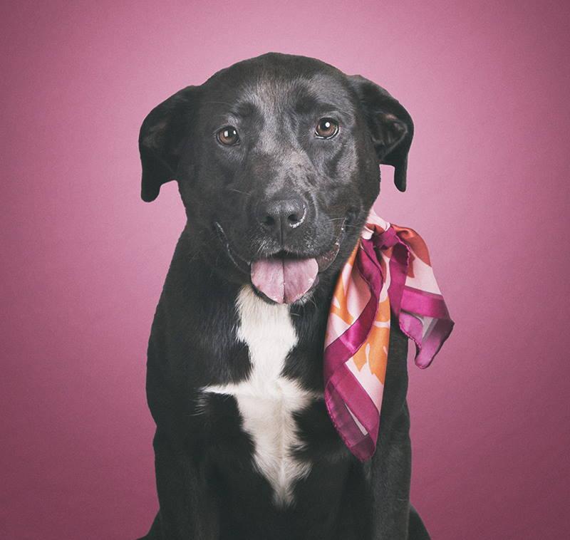 PREDSTAVLJEN NA CRNI PETAK: Kalendar Skloništa u Dumovcu krase fotografije crnih pasa