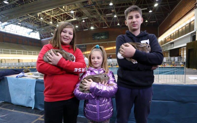 Više od tisuću eksponata na izložbama malih životinja u Velikoj Gorici