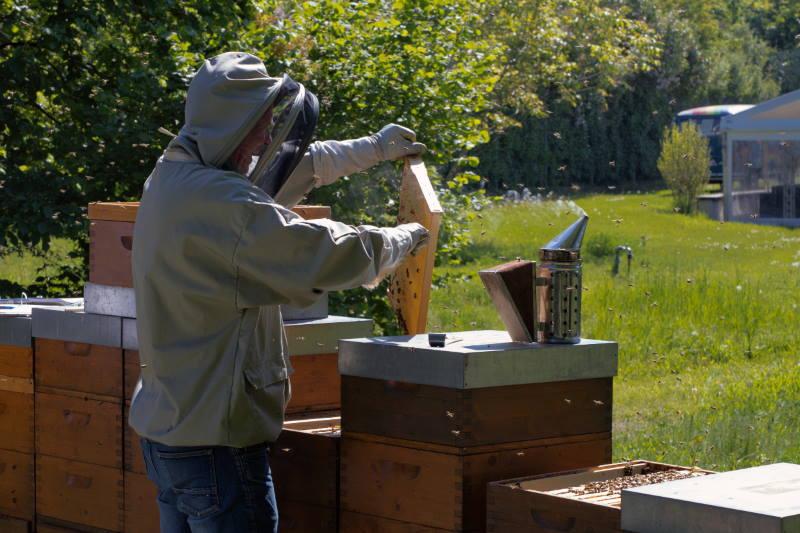 Beč je europska prijestolnica pčela! U gradu je čak 5000 košnica o kojima brinu pčelari, udruge i gradske službe
