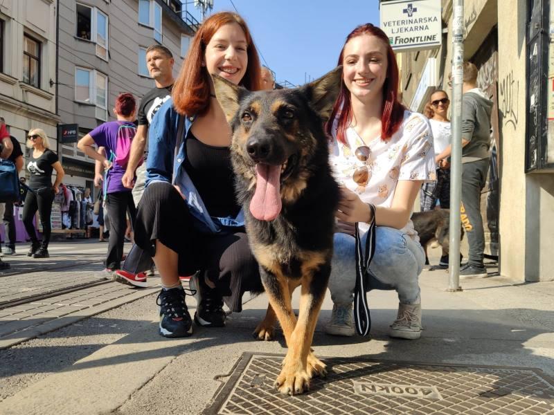 PERFORMANS: Umjetnik Siniša Labrović na Ilici organizirao šetnju za dvadesetak pasa iz Dumovca